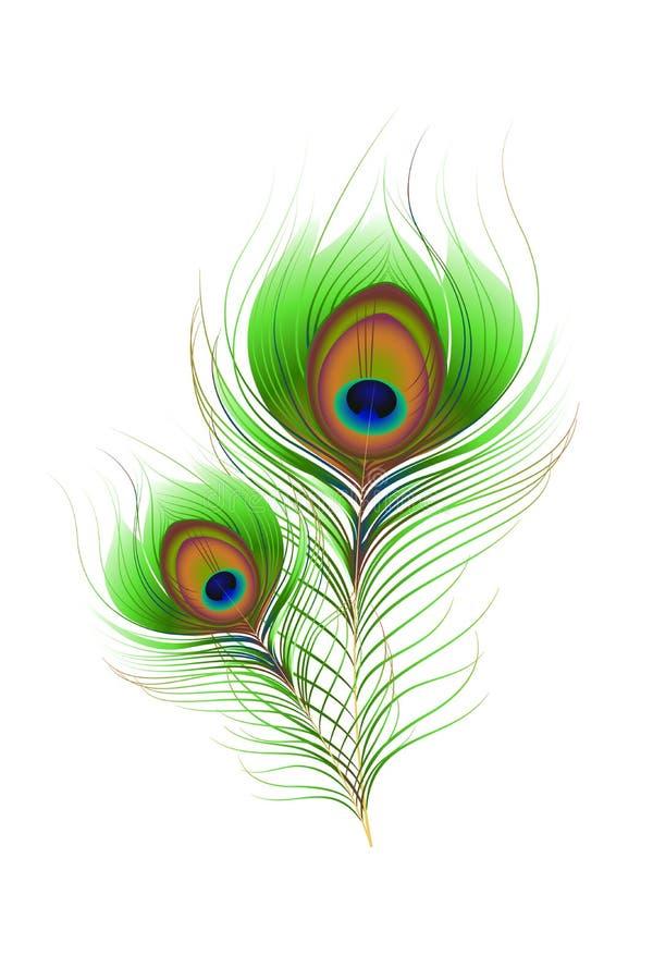 Pluma colorida del pavo real ilustración del vector