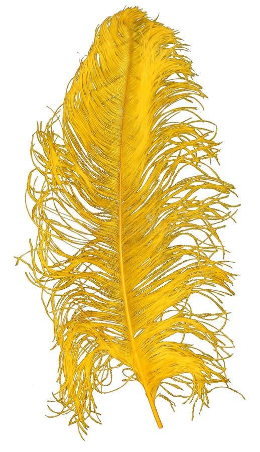 Pluma de la avestruz fotos de archivo libres de regalías