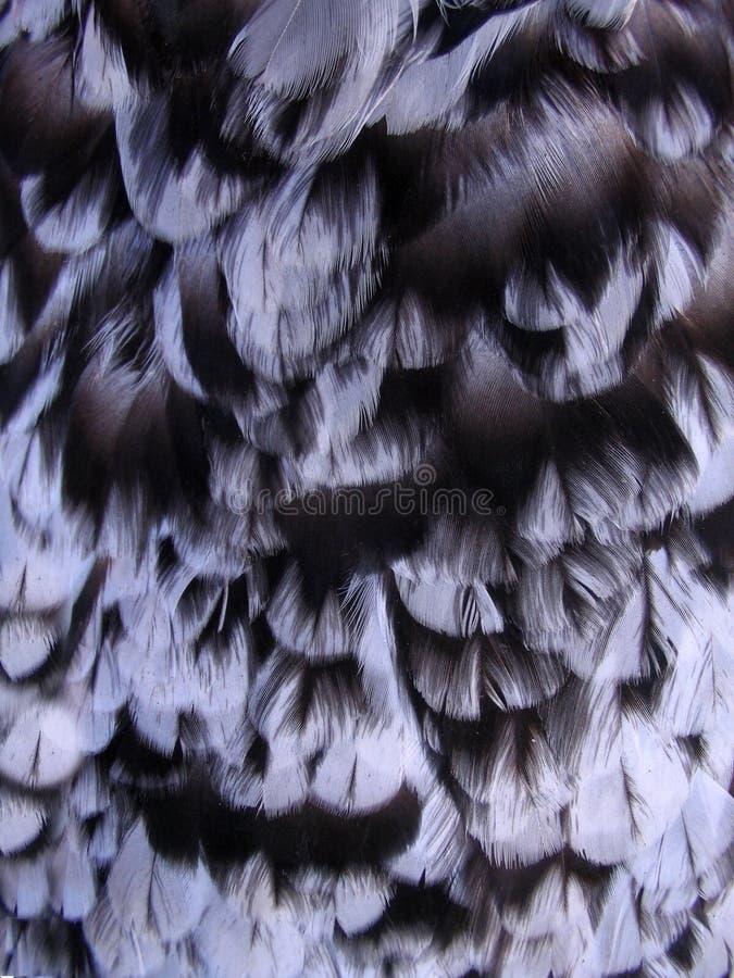 Pluma de la gallina imagen de archivo