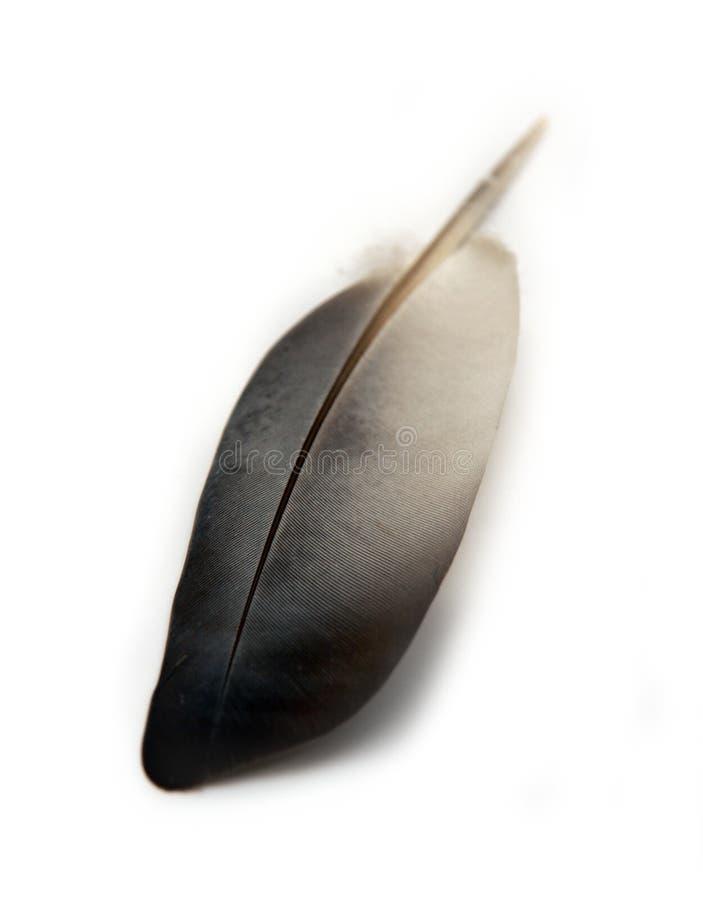 Pluma de la paloma foto de archivo