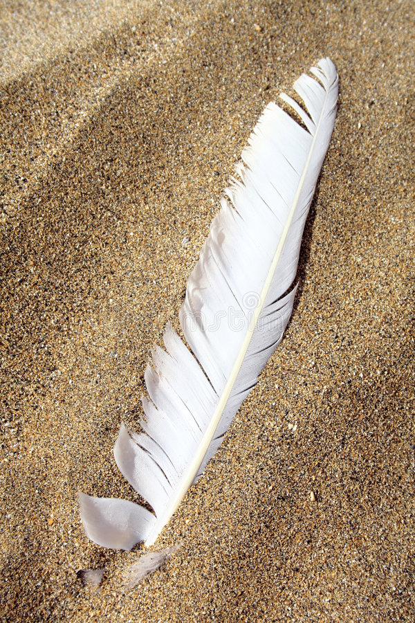 Pluma de la playa fotografía de archivo