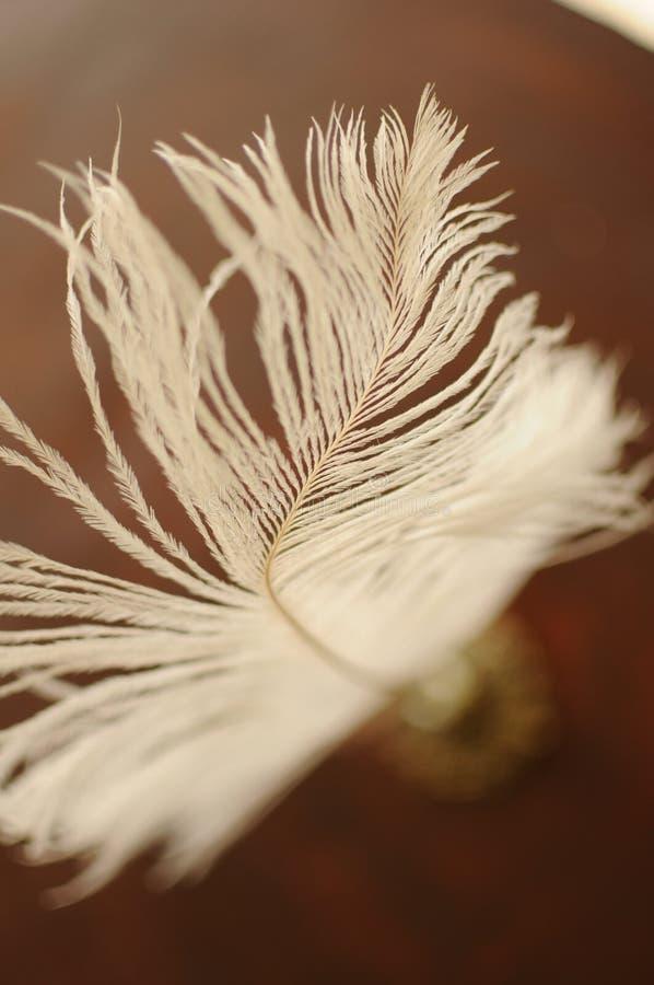 Pluma de la pluma foto de archivo