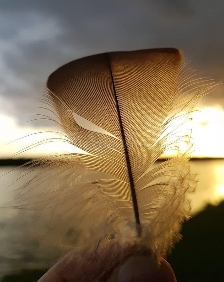 Pluma de la puesta del sol fotos de archivo
