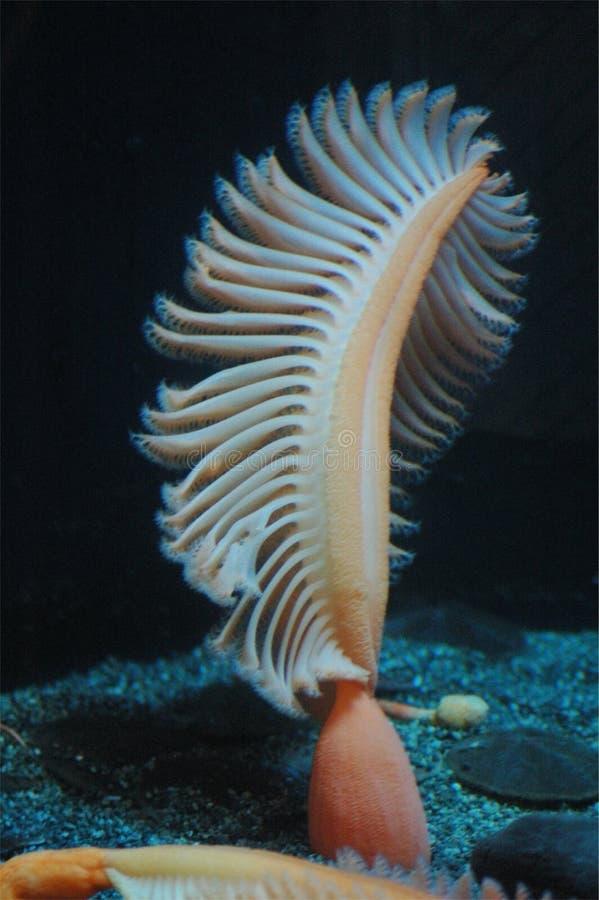 Pluma de mar fotos de archivo