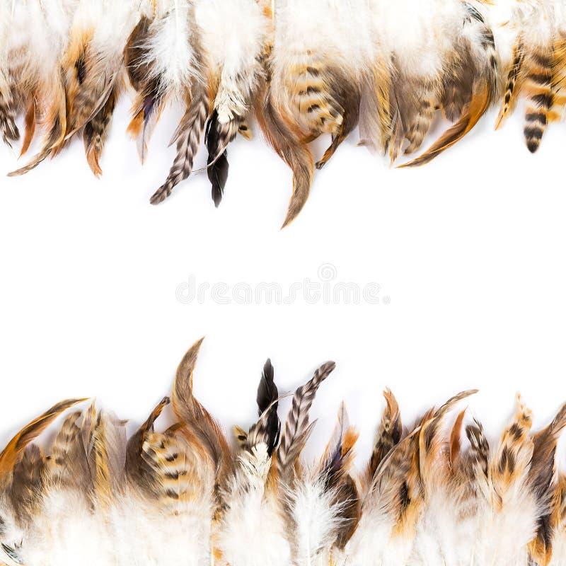 Download Pluma de pájaro foto de archivo. Imagen de objeto, línea - 41903192