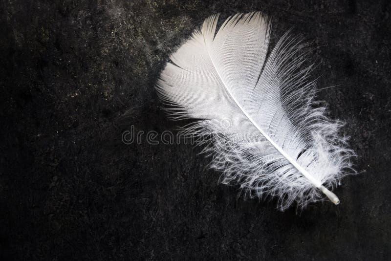 Pluma de pájaro delicada limpia blanca en el fondo de piedra concreto negro, contraste, pureza, equilibrio foto de archivo