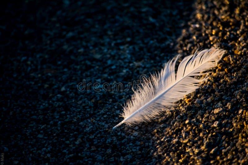 Pluma de pájaro en el agua imágenes de archivo libres de regalías