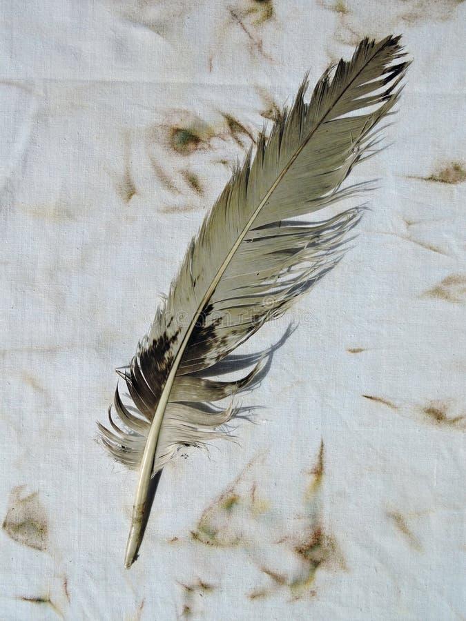 Download Pluma de pájaro vieja foto de archivo. Imagen de animal - 44853534