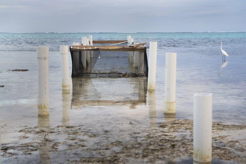 Pluma del Egret y de los pescados de la pesca fotos de archivo libres de regalías