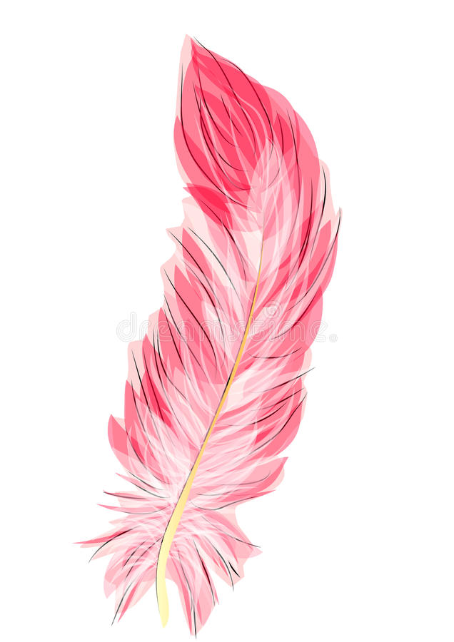 Pluma del flamenco stock de ilustración