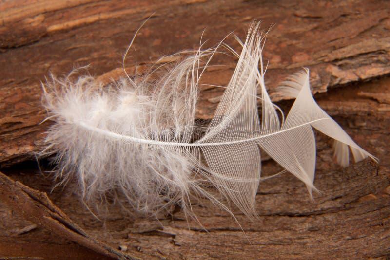 Pluma del ganso imágenes de archivo libres de regalías