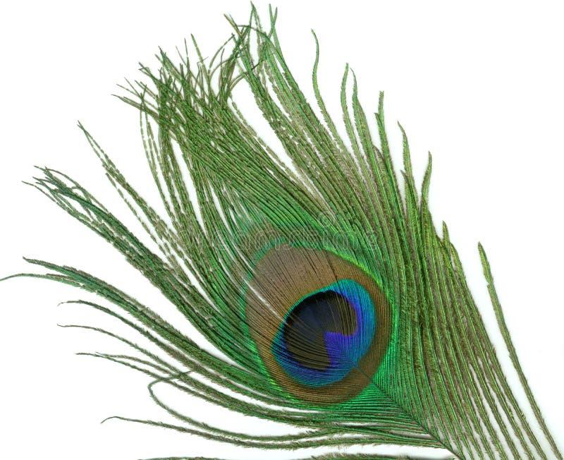 Pluma del pavo real imagen de archivo