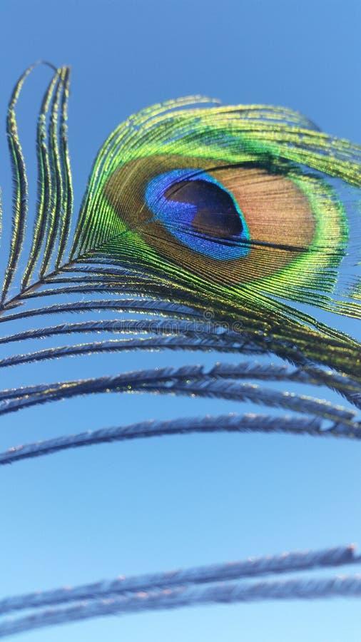 Pluma del pavo real fotos de archivo