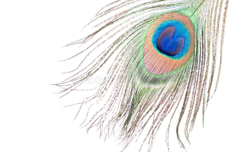 Pluma del pavo real en blanco foto de archivo