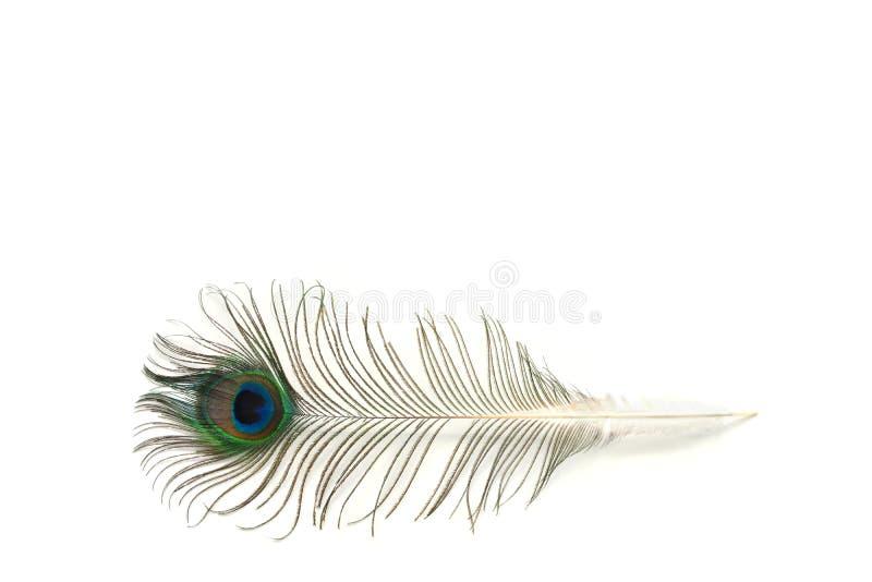 Pluma del pavo real en el fondo blanco imagenes de archivo