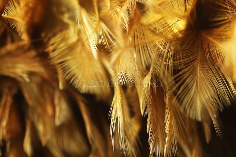 Pluma 2 del pollo imágenes de archivo libres de regalías