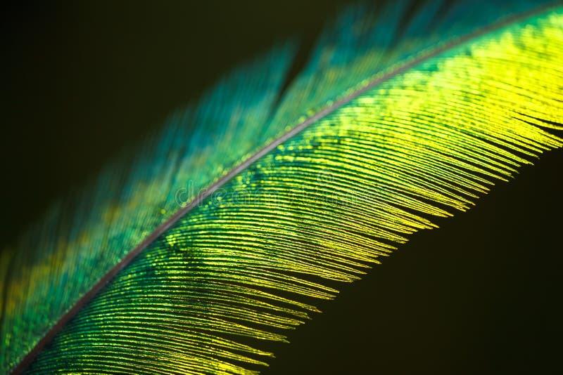 Pluma del quetzal imágenes de archivo libres de regalías