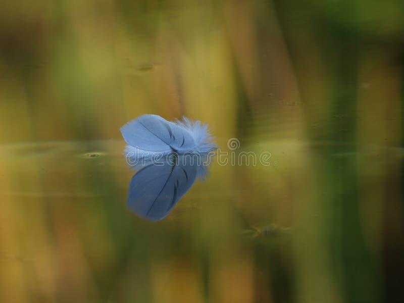 Pluma flotante foto de archivo libre de regalías