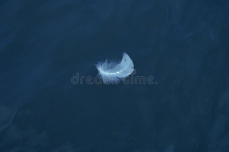 Pluma flotante imagen de archivo libre de regalías