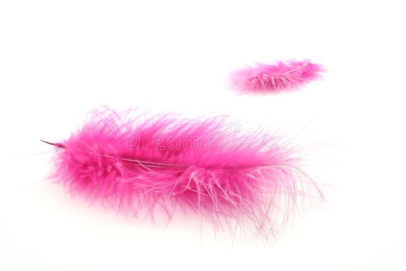 Pluma rosada fotografía de archivo libre de regalías