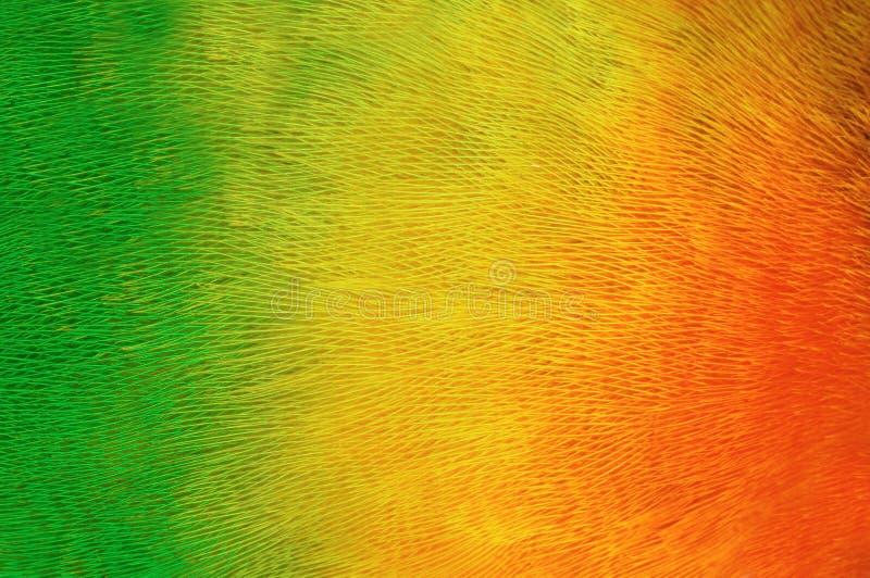 plumage попыгая предпосылки стоковая фотография
