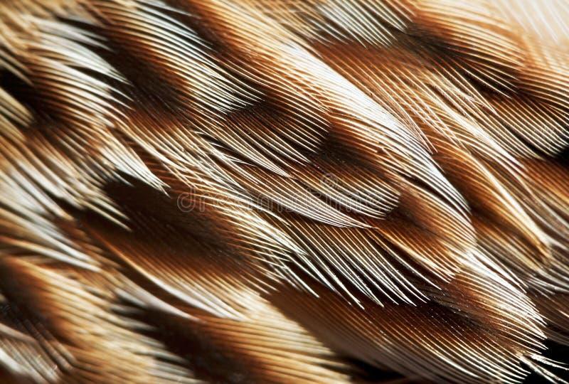 Plumage background. Of bird closeup royalty free stock photos