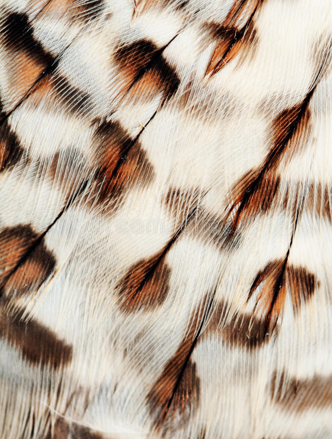 Plumage background royalty free stock photo