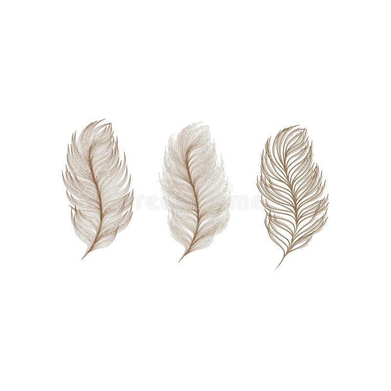 plumas stock de ilustración