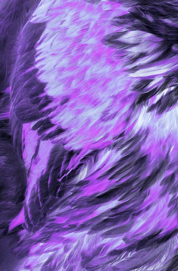 Plumas abstractas de la lila fotografía de archivo libre de regalías