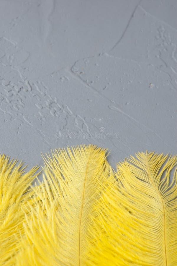 Download Plumas Amarillas De La Avestruz Imagen de archivo - Imagen de shape, saludo: 100533381