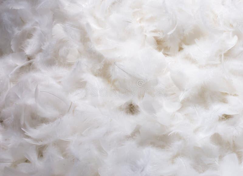 Plumas blancas fotos de archivo libres de regalías
