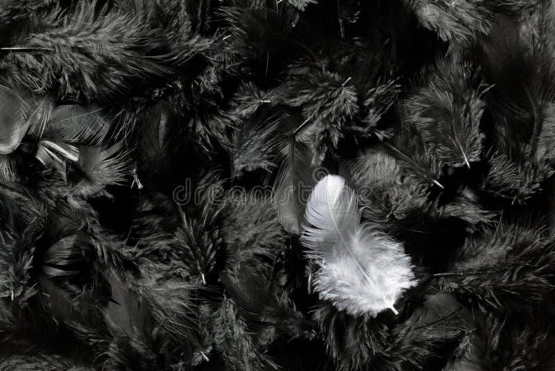 Plumas blancas y negras imagen de archivo libre de regalías