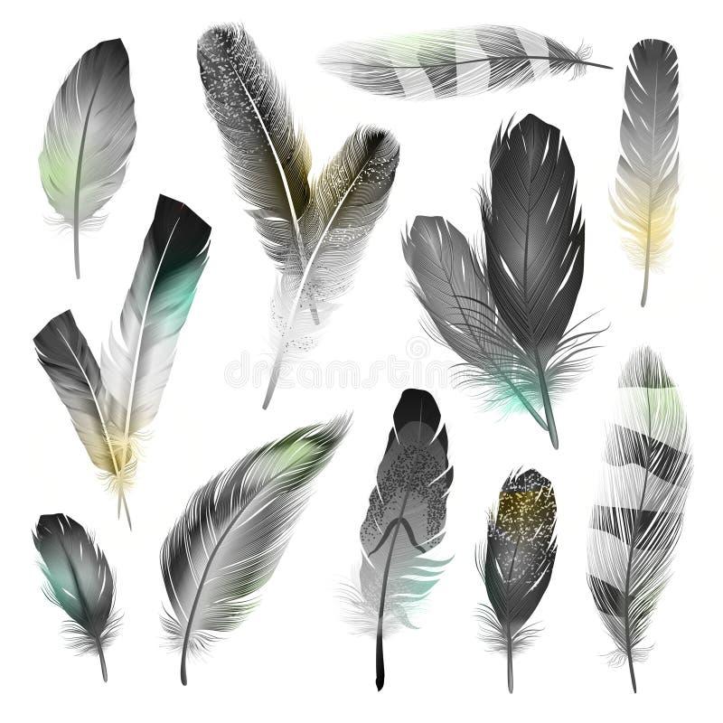 Plumas blancos y negros fijadas ilustración del vector