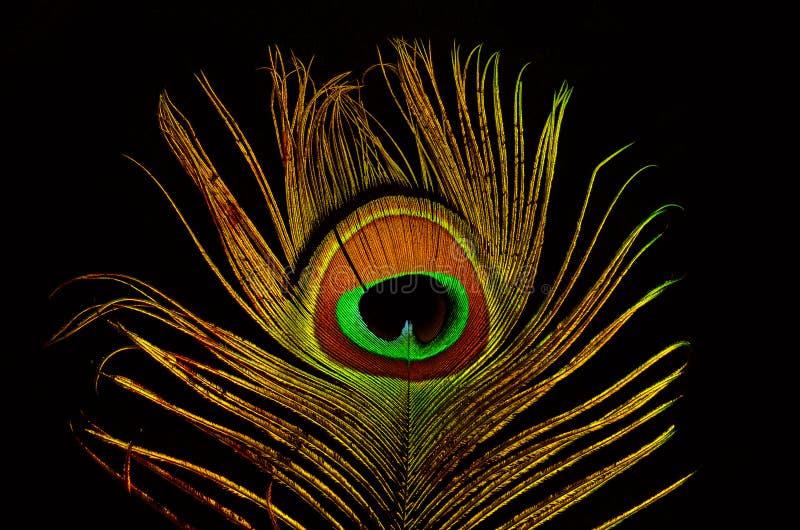 Plumas brillantes de un cierre del pavo real para arriba imagen de archivo libre de regalías