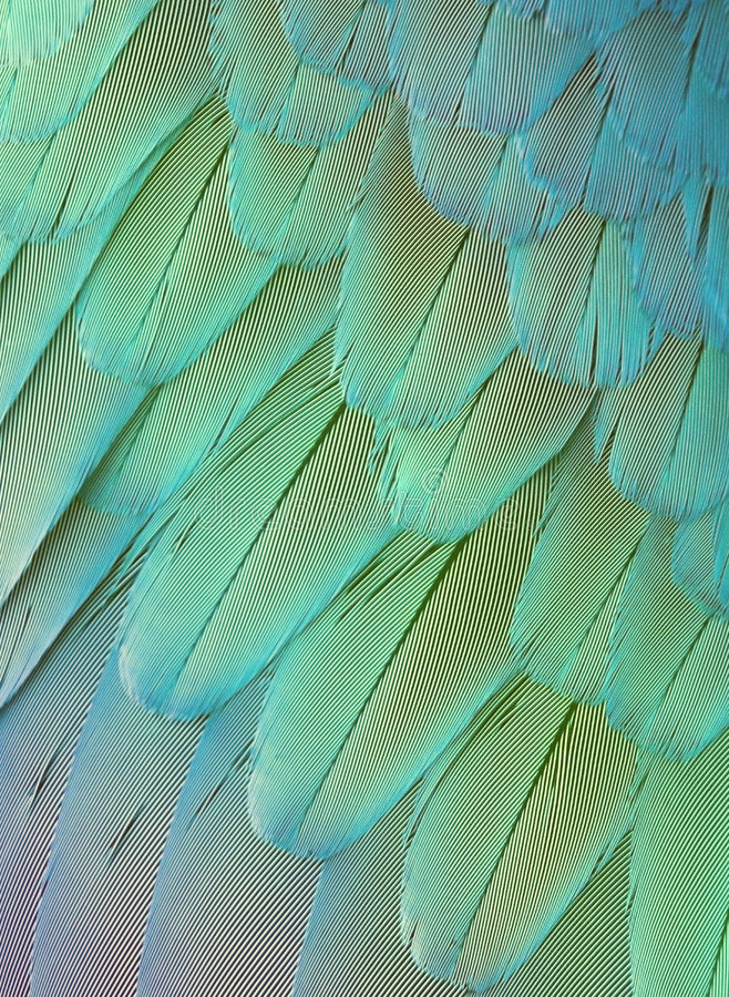 Plumas brillantes del loro imagen de archivo libre de regalías