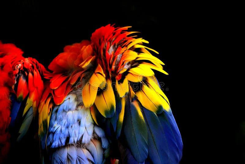 Plumas coloridas abstractas foto de archivo libre de regalías