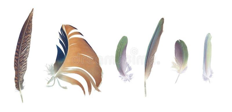 Plumas coloridas colección, sistema de pájaros al azar foto de archivo