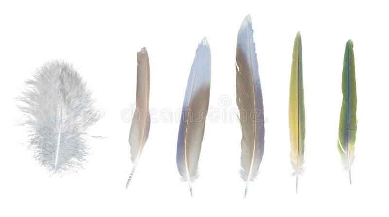 Plumas coloridas colección, sistema de pájaros al azar fotografía de archivo libre de regalías