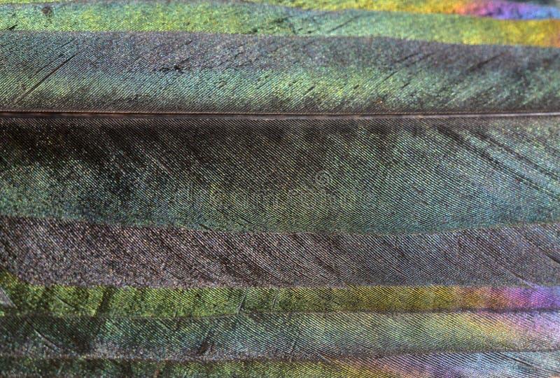 Plumas de la urraca imagen de archivo