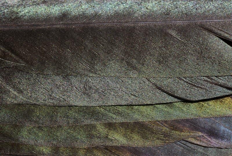 Plumas de la urraca imagen de archivo libre de regalías