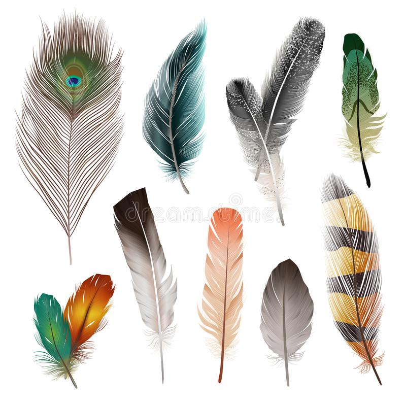 Plumas de pájaro fijadas stock de ilustración