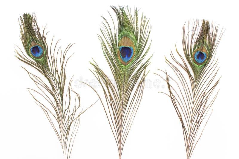 Plumas del pavo real aisladas en blanco fotos de archivo libres de regalías