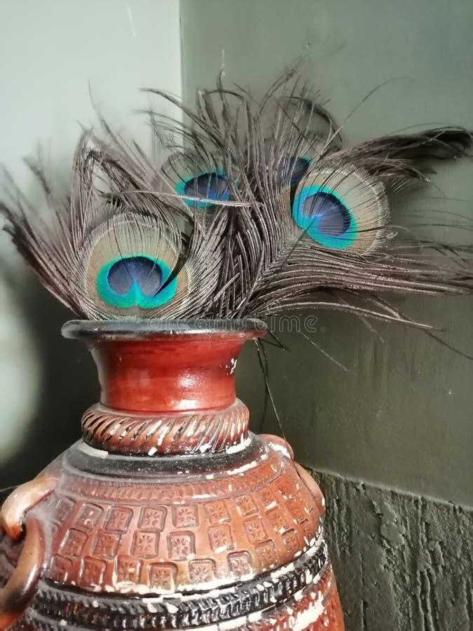 Plumas del pavo real colocadas en un pote viejo imagenes de archivo