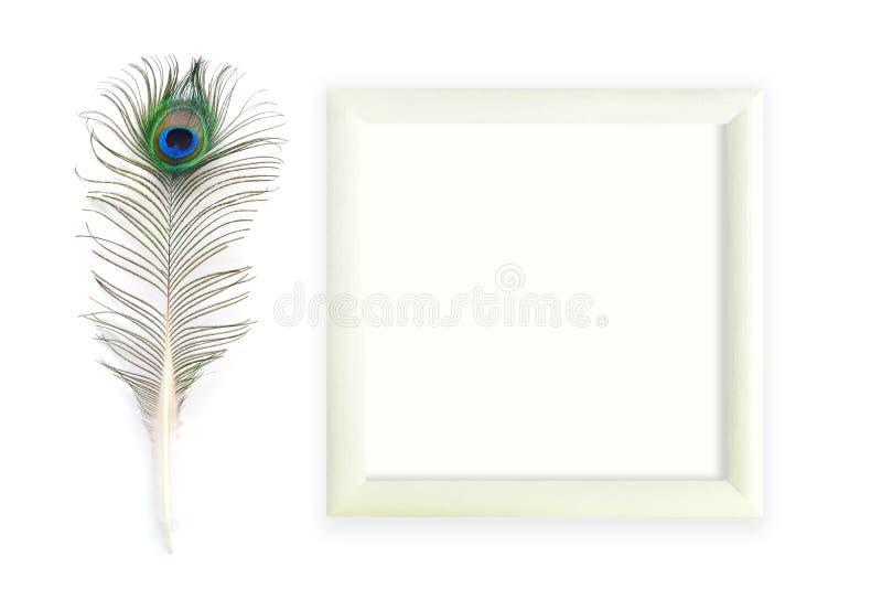 Plumas del pavo real con el marco cuadrado imagenes de archivo