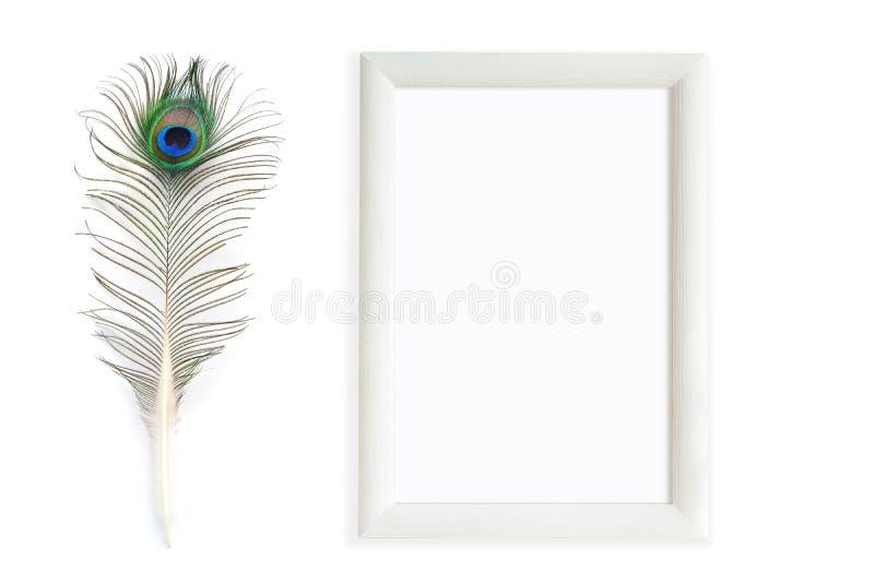 Plumas del pavo real con el marco rectangular imagen de archivo libre de regalías