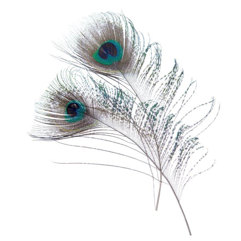 Plumas del pavo real del primer imágenes de archivo libres de regalías