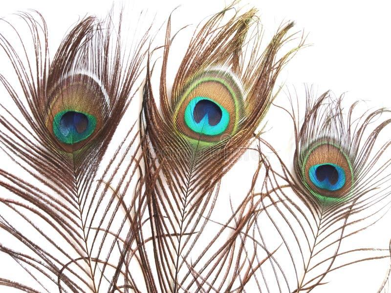 Plumas del pavo real en el fondo blanco foto de archivo
