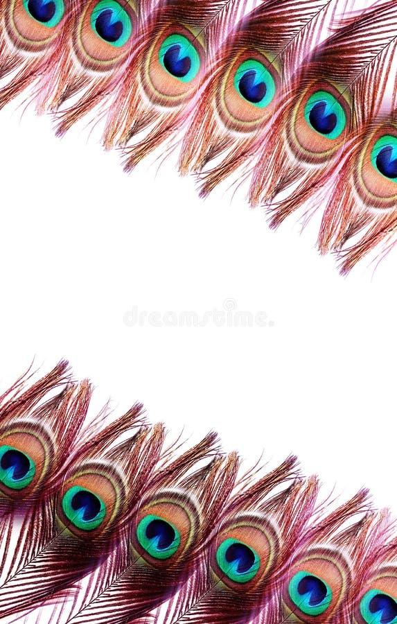 Plumas del pavo real en el fondo blanco fotos de archivo