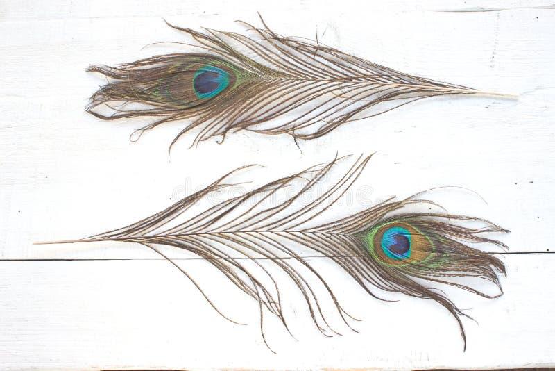 Plumas del pavo real en el fondo de madera blanco fotografía de archivo