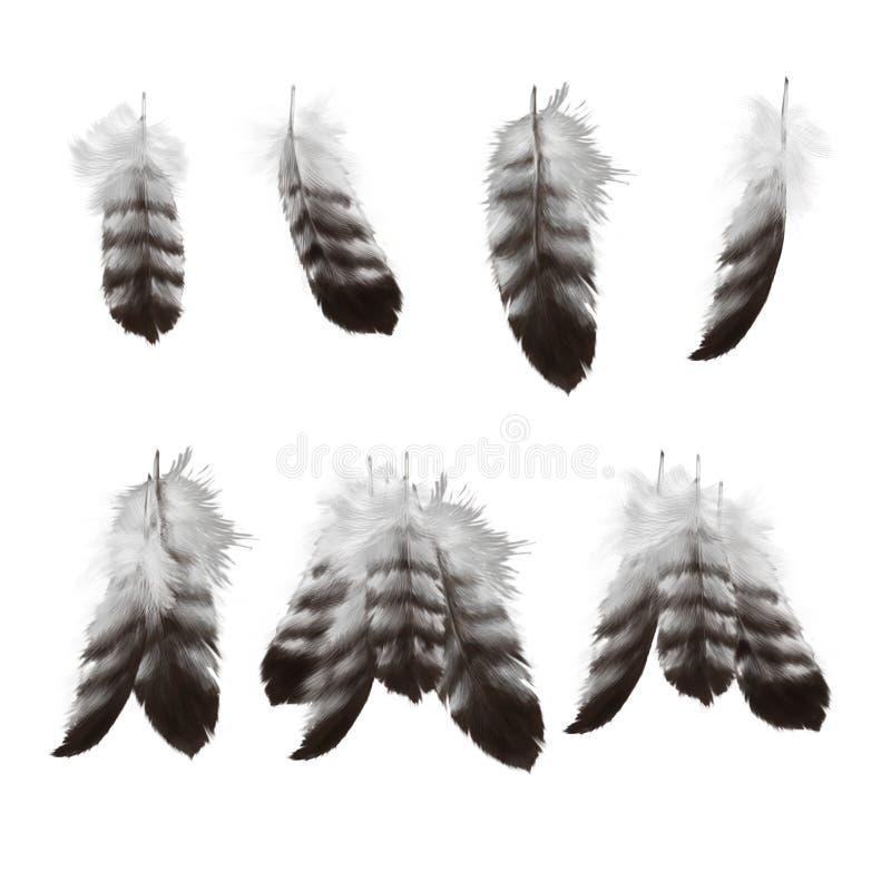 Plumas drenadas mano del águila fijadas stock de ilustración